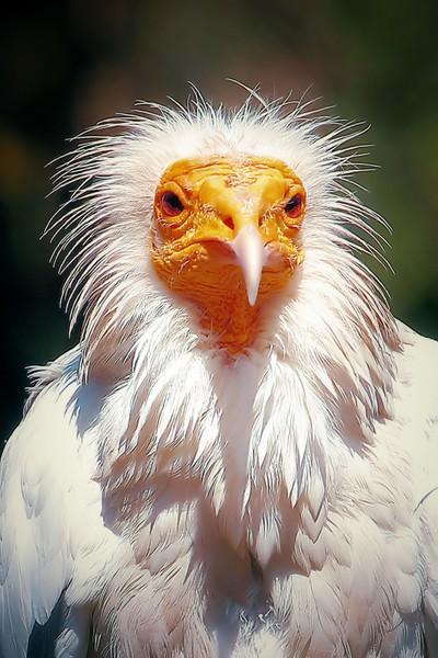 Vulture Dress Up    IMG_4433