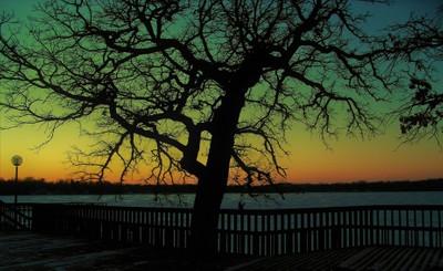 Tree Effect