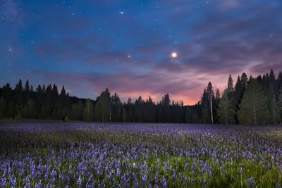 Sagehen Meadow at Night 1