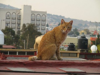 Cat on roof top in Mexico City!