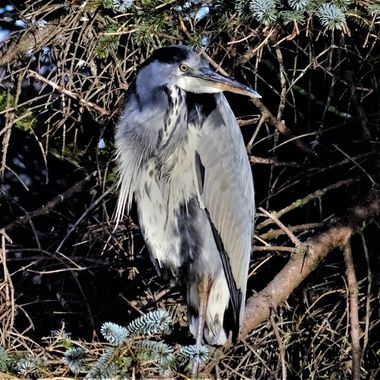 Observing Mr Heron waiting for his next catch to come along :)