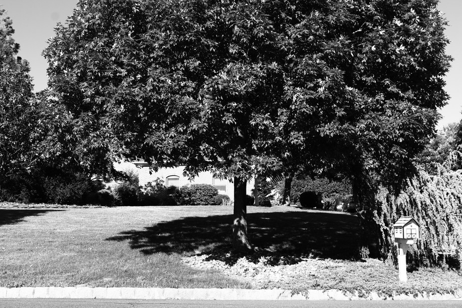 Just a tree creating some shade from a hot summer day. Positive feedback is appreciated and welco...