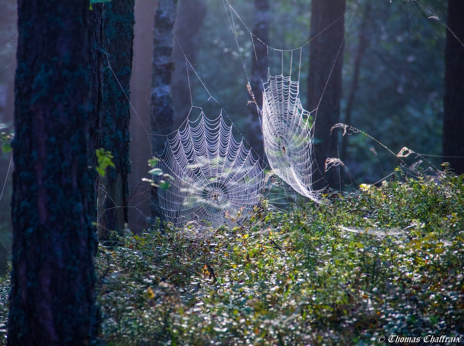 Photo taken at sunrise in a forest on Rannametsa–Tolkuse nature study trail in Estonia.