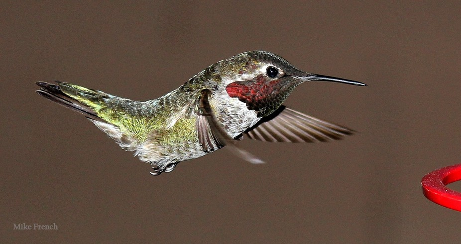 The hummingbirds get really active in the evening.