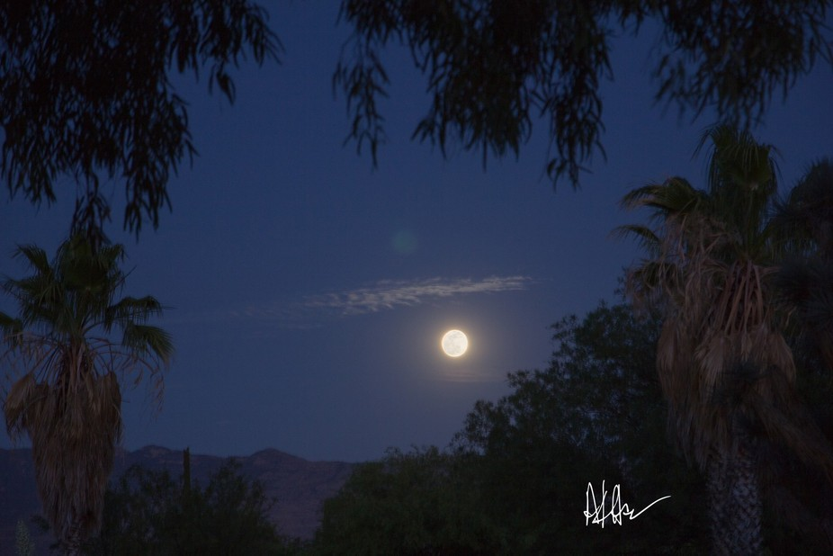 """A full moon lights up the night sky and subtle clouds as seen through a """"window"""" of trees."""
