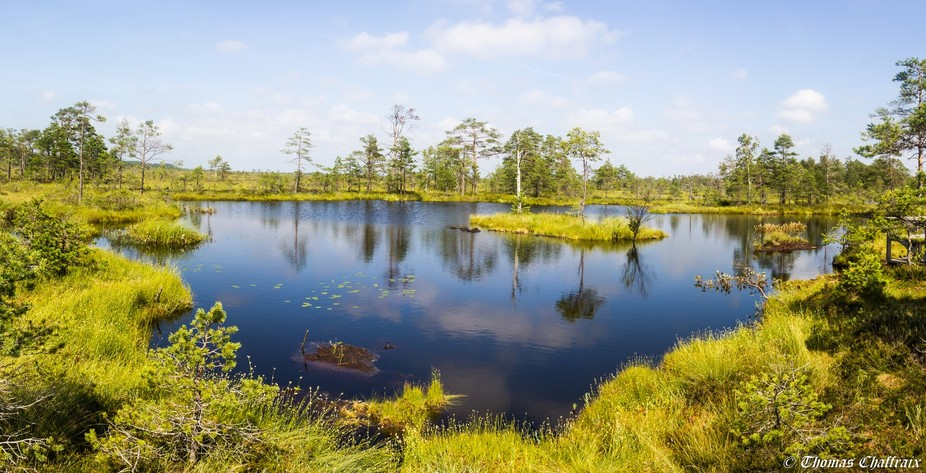 Photo taken in a swamp on the Rannametsa–Tolkuse nature study trail in Estonia