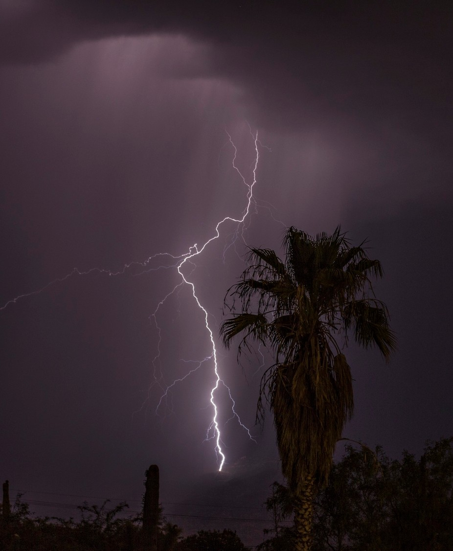 A gorgeous lightning strike lights up the night for the perfect Palm tree shot.