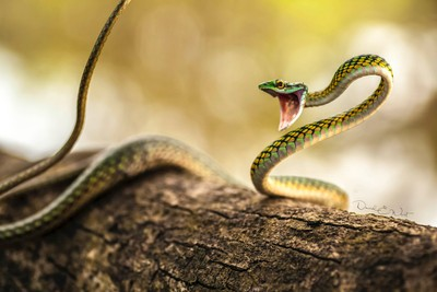 Animated Parrot Snake