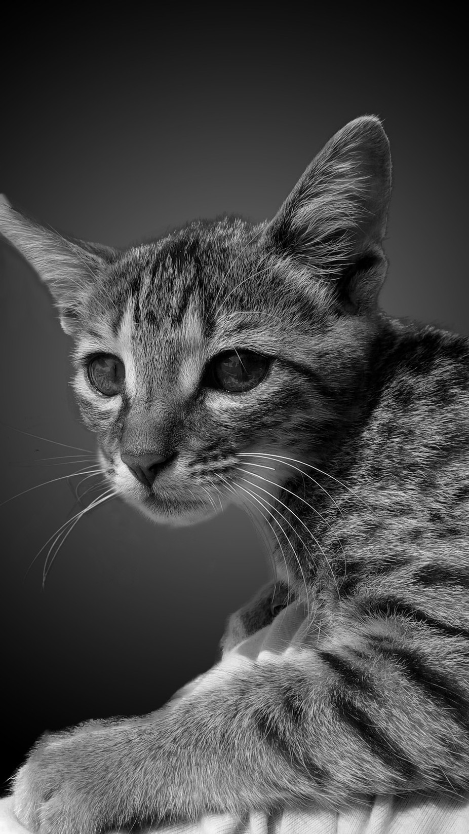 Cat by KarthiMurugesan - Kittens vs Puppies Photo Contest