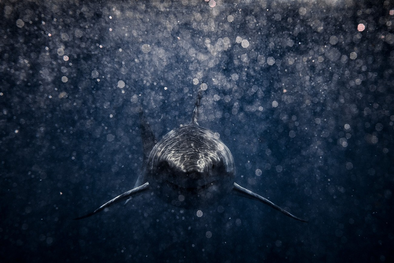 10+ Incredible Photos Of Animals And Water You Gotta See