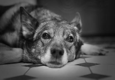 15 years old dog