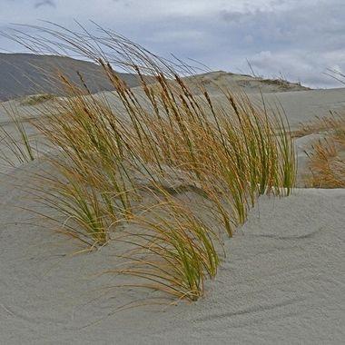 Marron Grass