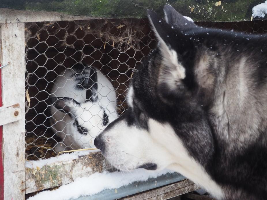 Snowy friends.