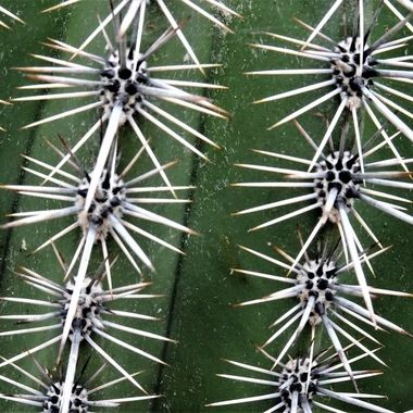 Cati spikes photographed in a botanical garden love this texture