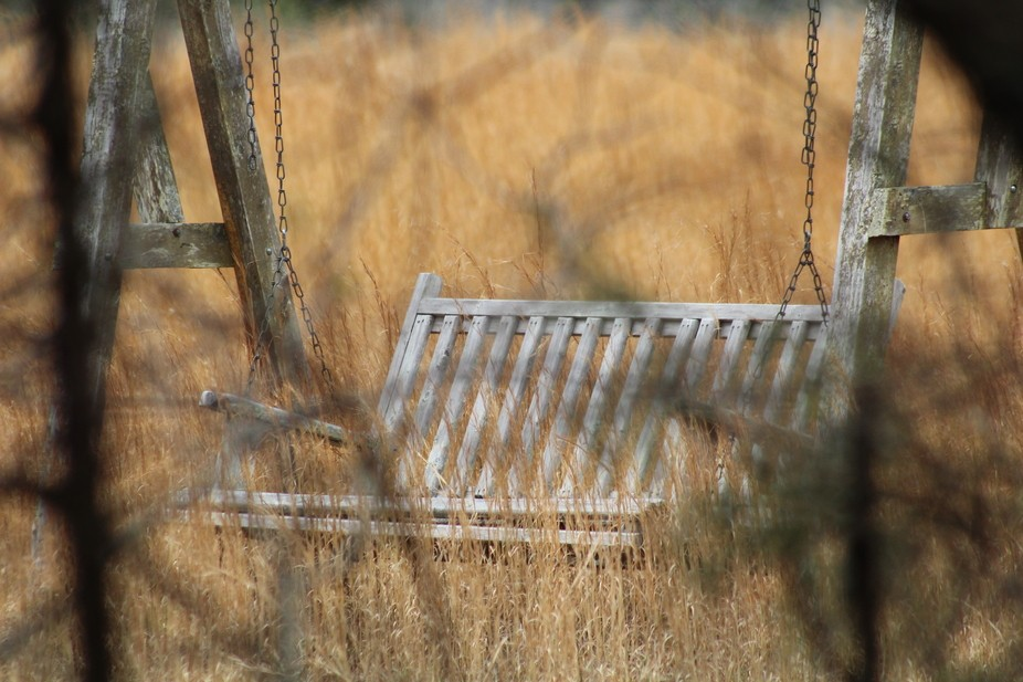 Through the trees because it was on private property, a porch swing sits in a Lebanon, TN wheat f...