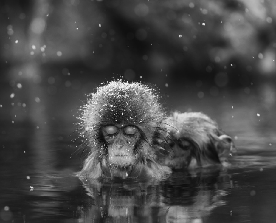 The Jigokudani Monkey Park offers visitors the unique experience of seeing wild monkeys bathing i...