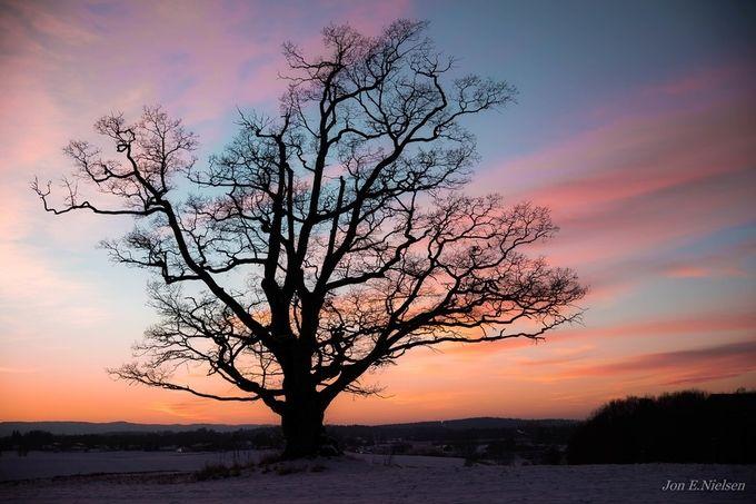 """"""" Oak tree """" by JonENielsen - A Lonely Tree Photo Contest"""