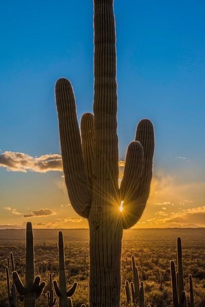 Saguaro Starburst