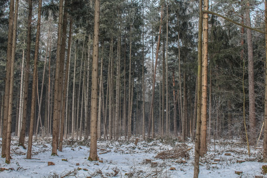 Forestscape - Winter