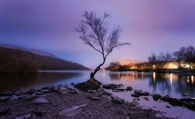 151606---Purple-rain