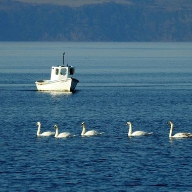 Traffic Congestion out @ Sea today in The Moray Firth