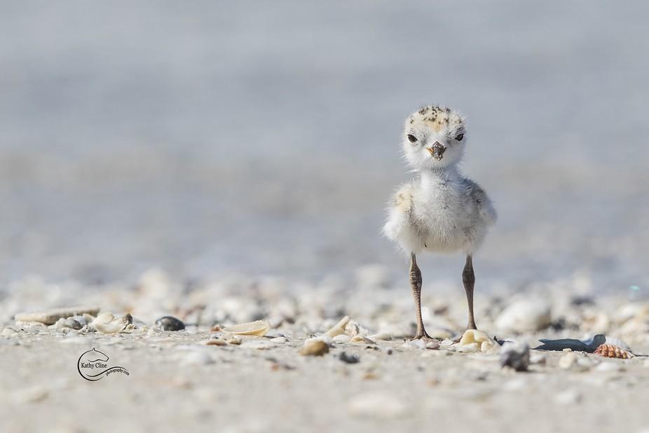 Cute Baby Animals Photo Contest Winner