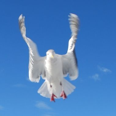 Very cool Seagull wings, the positioning of wings caught in action looks very angelic set off with a blur