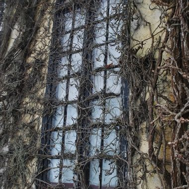 A very Spooky window - looks like church is held together by old wisteria plant - The Old Church Theater Building built in 1938 in Courtenay on Vancouver Island  -  February 14, 2017 Valentine's Day