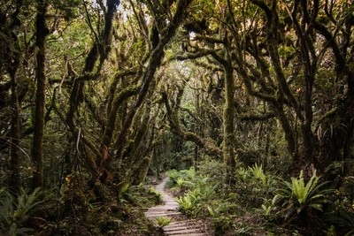 Walking the enchanted forest
