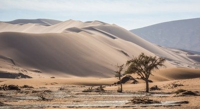 Desert Tree-2