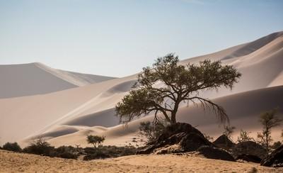 Desert Tree-1