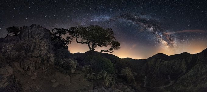 Starry tree by wildlifemoments - Tree Silhouettes Photo Contest