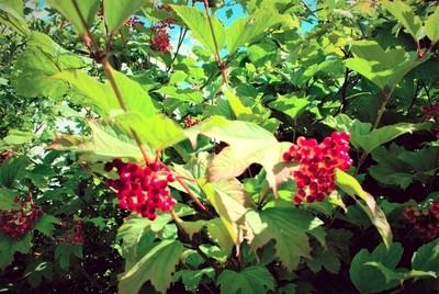 DSC_0711-berries-1