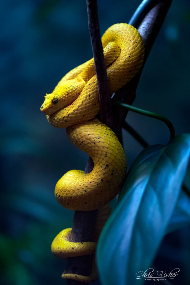 _DSC8634 by chrisfphotos - Snakes Photo Contest