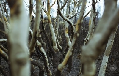 ghost forrest