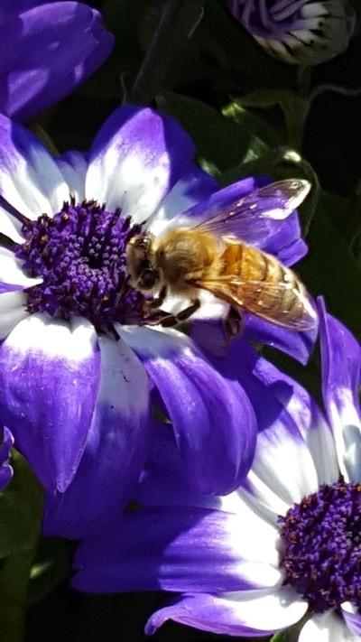 BEE Very Still