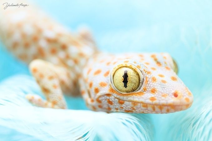 look at me by yuliantopongge - The Animal Eye Photo Contest vol1