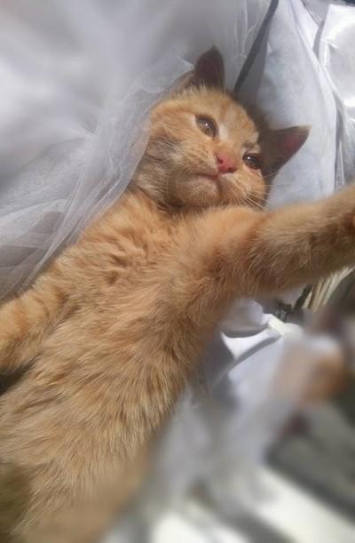 kitty took a selfie