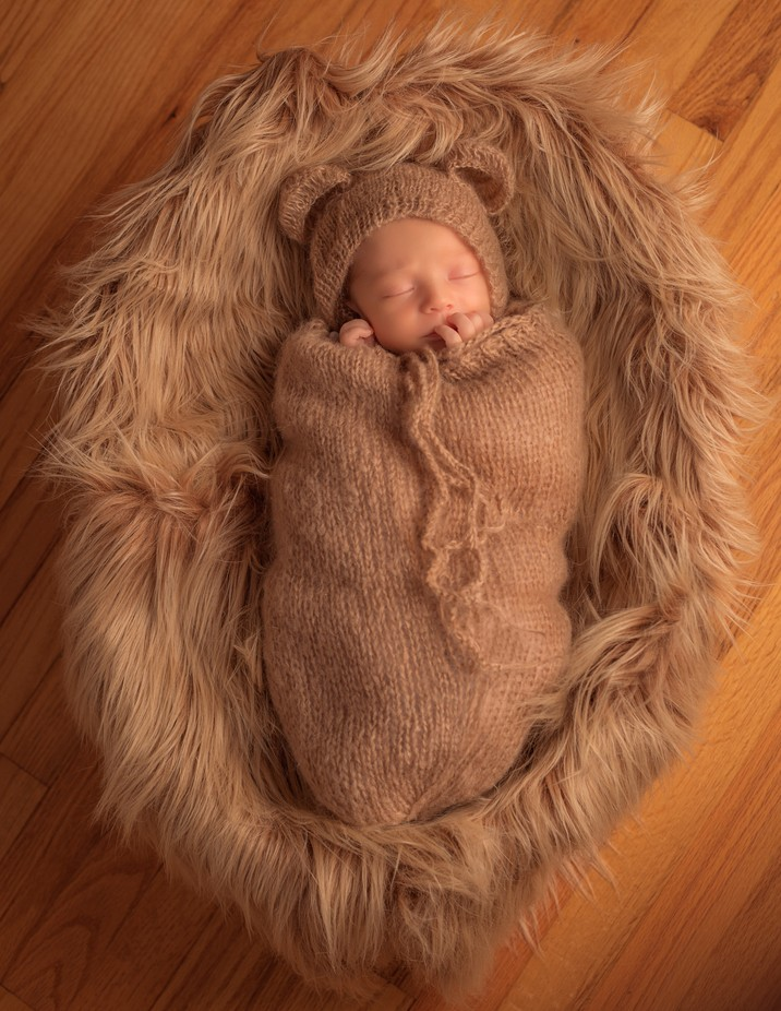 Little Baby Bear by scottfranks - Anything Babies Photo Contest