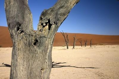 Dead Vlei Tree Trunk