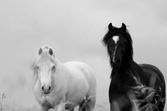 Black & White by CarpeDeeM - Opposites Photo Contest