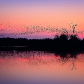 After the sun went behind the horizon it produced this gorgeous cotton candy sky and a huge flock of black birds flew into the sunset. I love the...