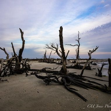 Folly Beach, South Carolina the Morris Island end of the beach.  Taken on 02-18-2017 the low tide and sunrise happens at the same time.    You can only get good access to this end of the beach when the tide is low. Some of the trees have been taken over by the ocean but still stand tall. The Boneyard is what the trees are called.
