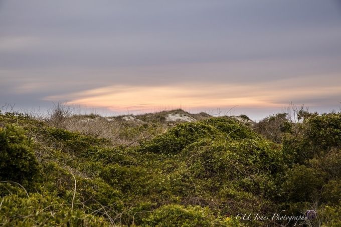 This is our version of mountains in the Low Country. Sand dunes covered in grass and vines.