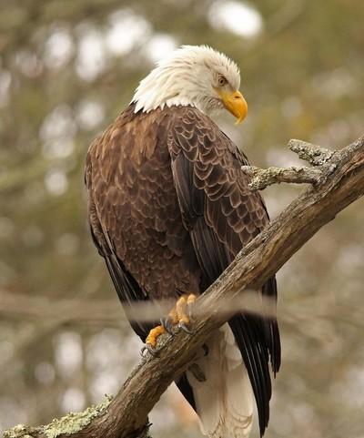 Bald Eagle Mongaup Falls