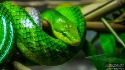 PhotoSynthetic- Green Snake
