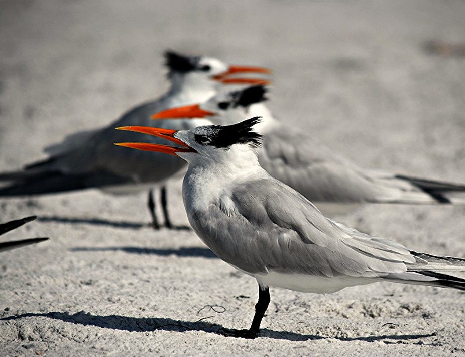 Three Terns in a row