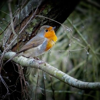 Just love birds and this robin was such a poser :)