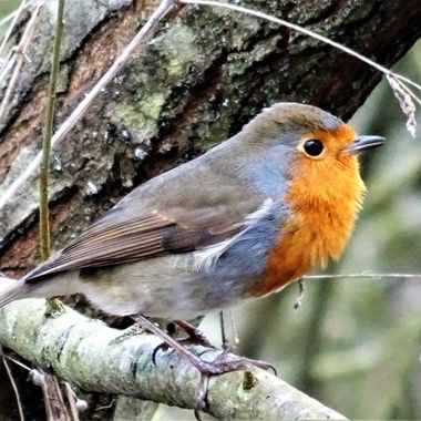 Good Day with Posing Robin who seemed to enjoy my company :)