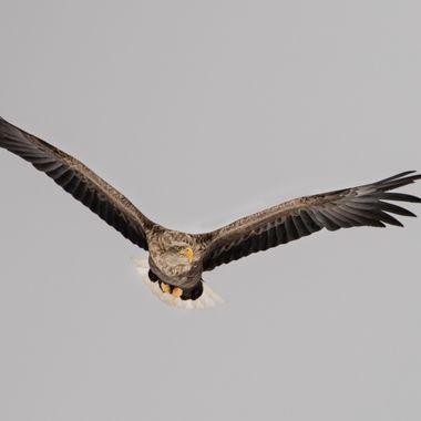 Poland, Eagle